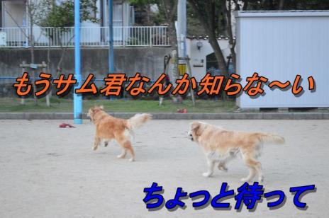 DSC_0474_20130707215010.jpg