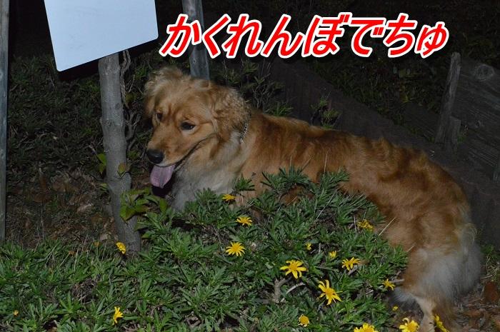 DSC_0476_20130517120916.jpg