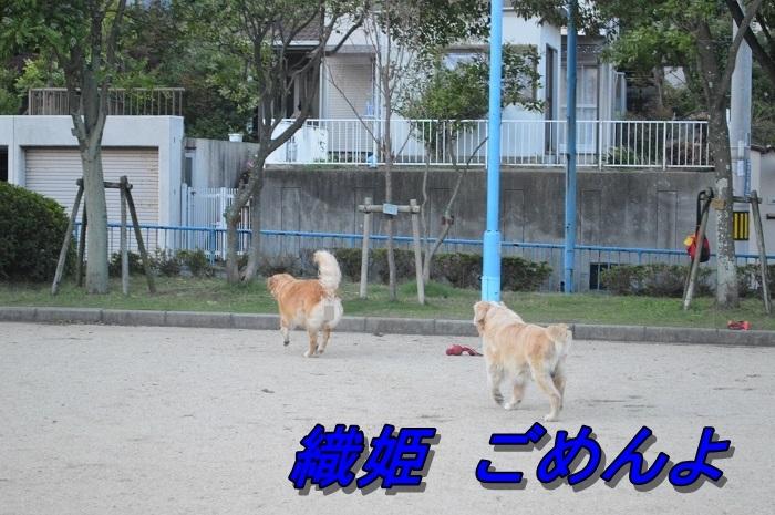 DSC_0476_20130707215009.jpg