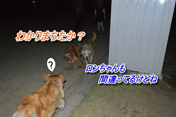 DSC_0478_20130517120949.jpg