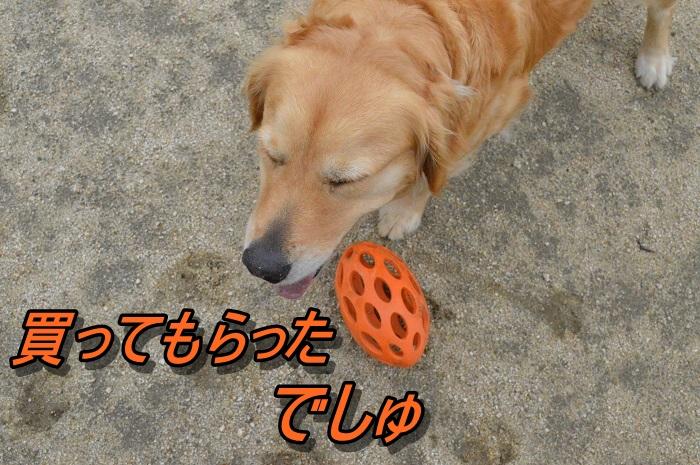 DSC_0501_20130529213607.jpg