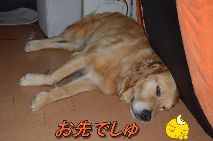 DSC_0510_20130709212721.jpg