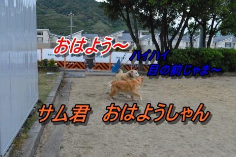 DSC_0536_20130529212526.jpg
