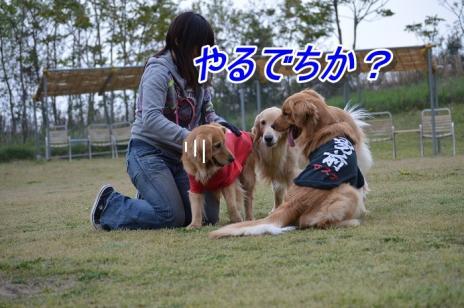 DSC_0562s.jpg