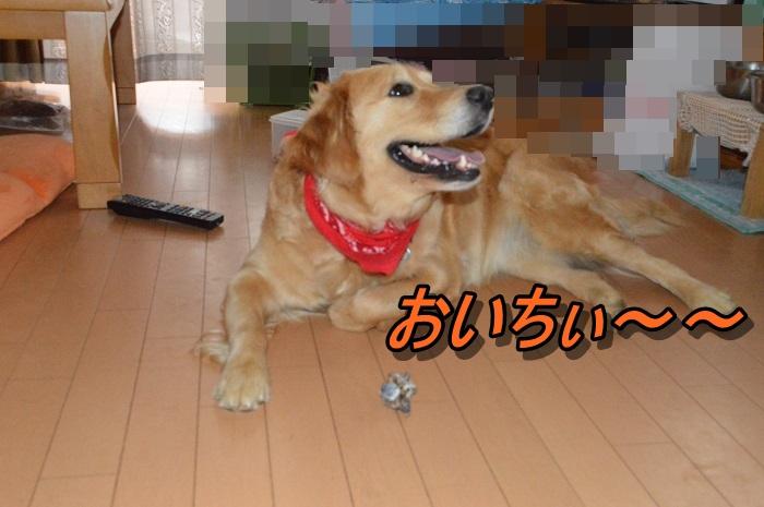 DSC_0571_20130530210911.jpg