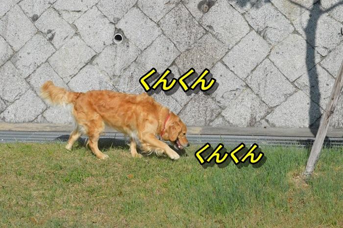 DSC_0593_20130608221107.jpg