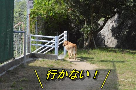 DSC_0603_20130608221147.jpg