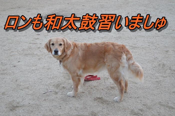 DSC_0620_20130520215239.jpg
