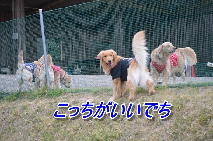 DSC_0643sa.jpg