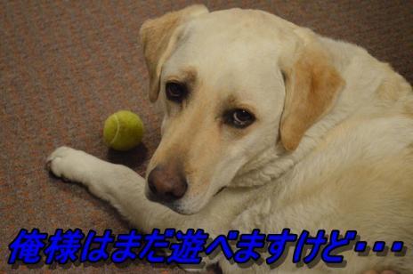 DSC_0663_20130602221104.jpg