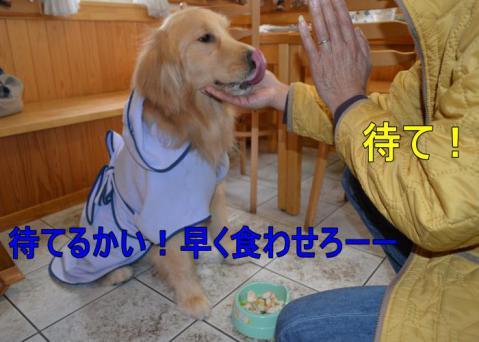 DSC_0672_convert_20130320163543.jpg