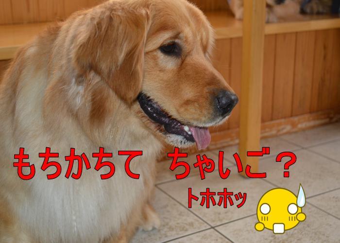 DSC_0676_convert_20130320164112.jpg