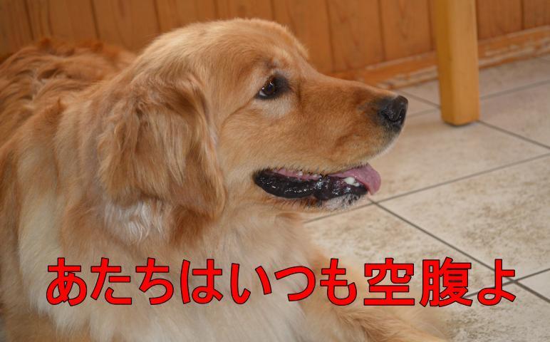 DSC_0685_convert_20130320195320.jpg