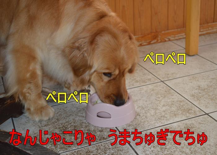 DSC_0686_convert_20130320164141.jpg