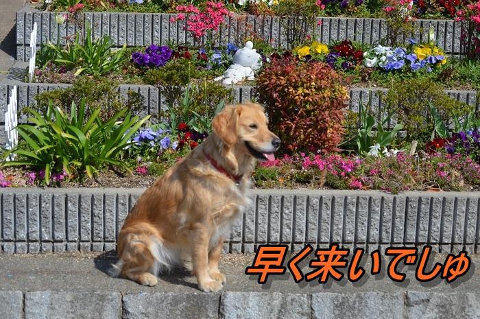 DSC_06989.jpg