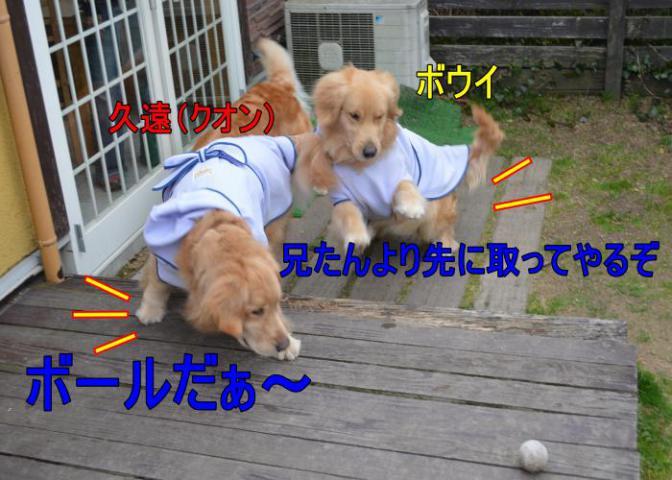 DSC_0698_convert_20130320193902.jpg