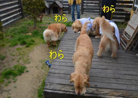 DSC_0703_convert_20130320164619.jpg