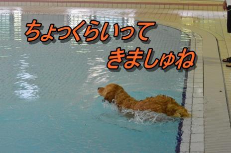 DSC_0708_20130603220647.jpg
