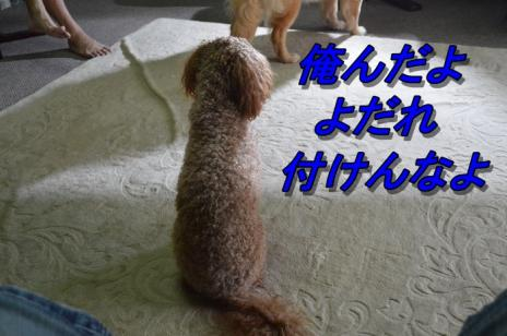 DSC_0720_20130714212820.jpg