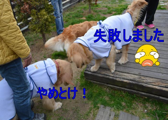DSC_0721_convert_20130320194245.jpg