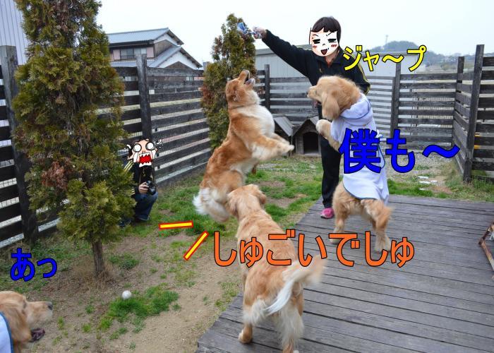 DSC_0727_convert_20130320165443.jpg