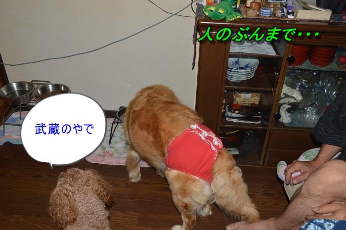DSC_0759_20130715225406.jpg