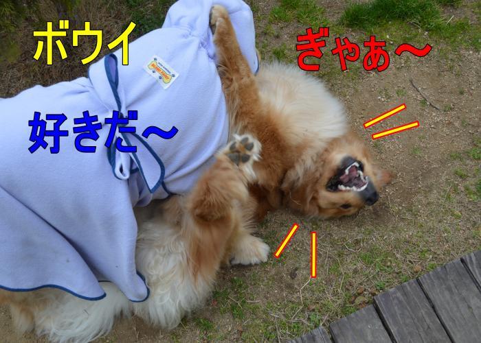 DSC_0770_convert_20130320165609.jpg