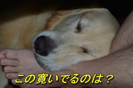 DSC_0776_20130714212817.jpg