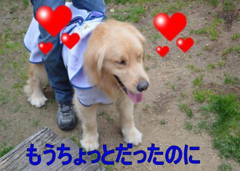 DSC_0780_convert_20130320165640.jpg