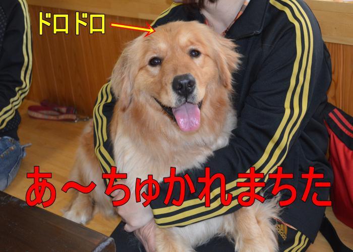 DSC_0788_convert_20130320165820.jpg