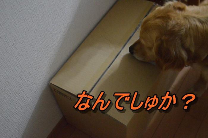 DSC_0812_20130523110828.jpg