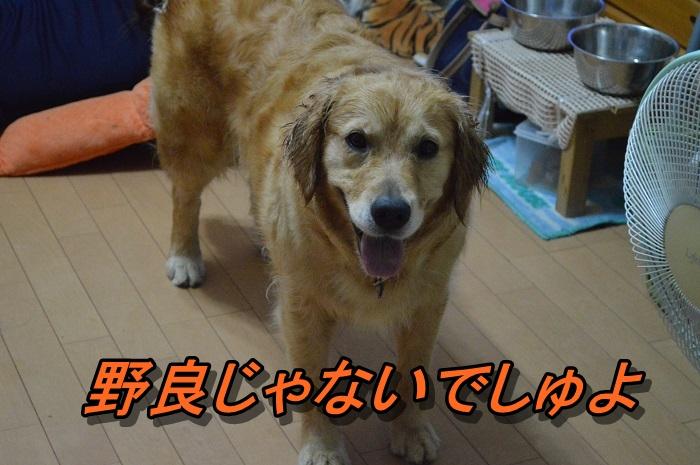 DSC_0872.jpg