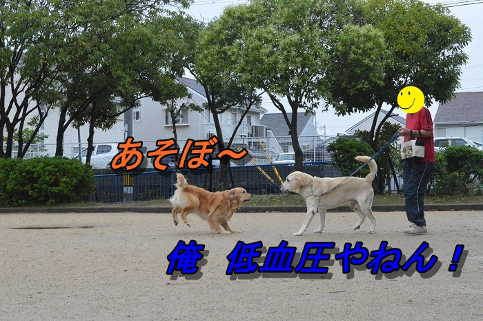 DSC_0912_20130621213629.jpg