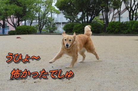 DSC_0919_20130621213627.jpg