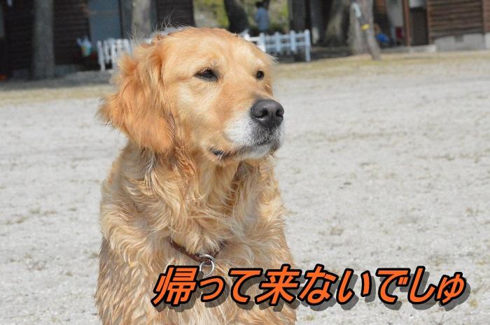 DSC_0966_20130511212830.jpg
