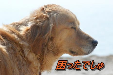 DSC_0981_20130511212830.jpg