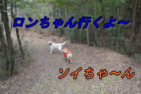 DSC_10271.jpg