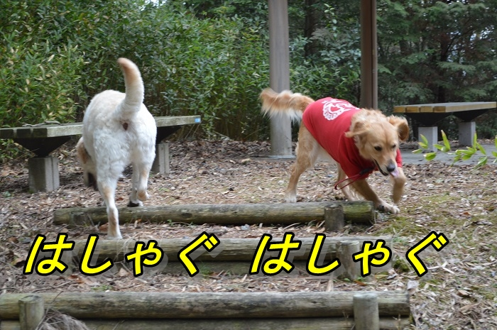 DSC_10278.jpg