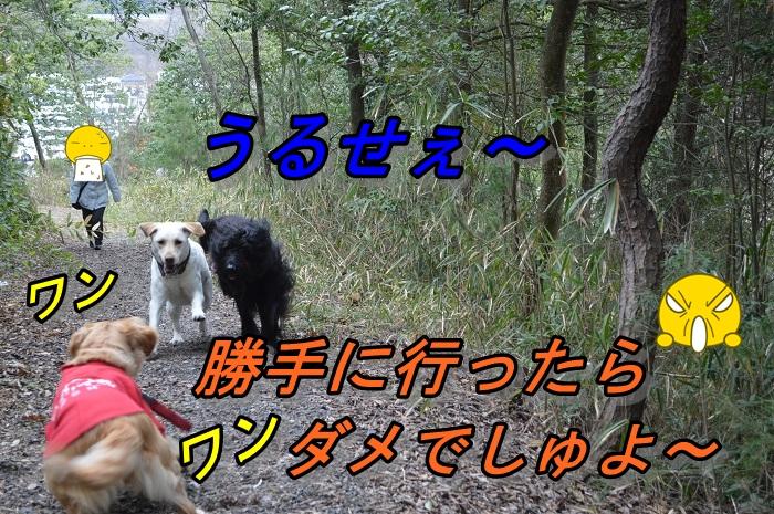 DSC_10286.jpg