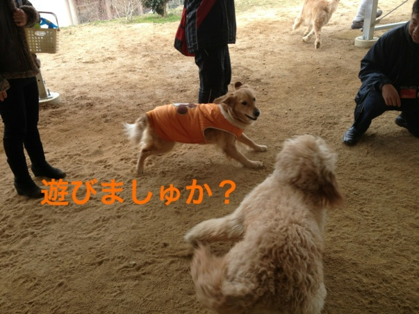 IMG_2513.jpg