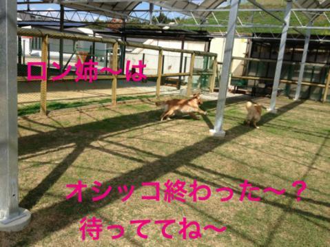 IMG_3684.jpg