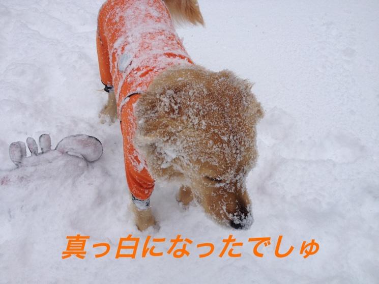 IMG_4469.jpg