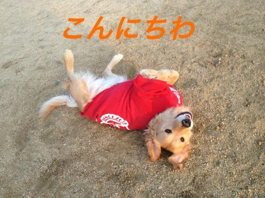 IMG_6403.jpg