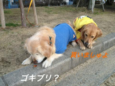 IMG_9043.jpg