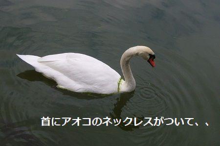 HAKUTYOU ブログ