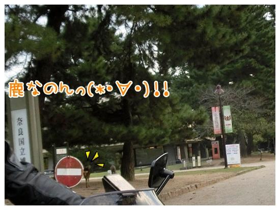 CIMG7964_20121028185218.jpg