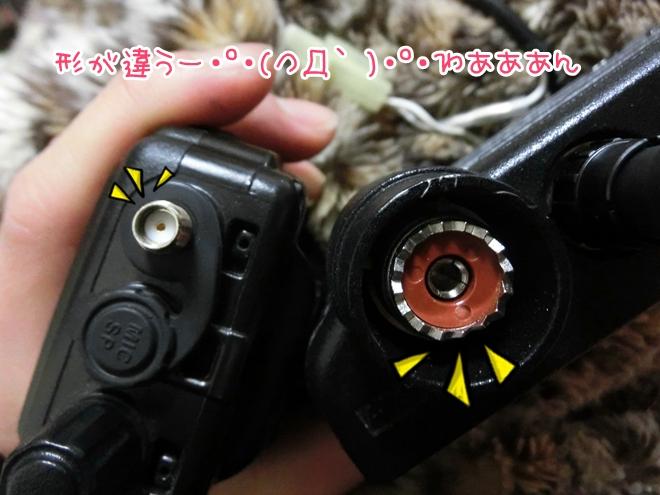 CIMG8366.jpg