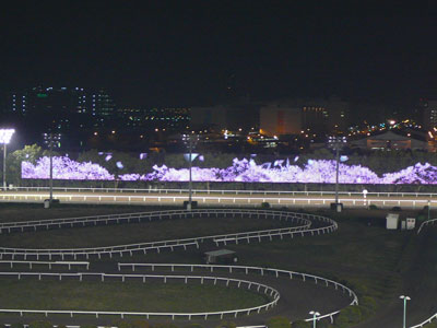 【悲報】大井競馬で日韓交流競走開催へ