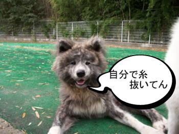 10_20121124150046.jpg