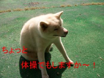 あきダイエット4